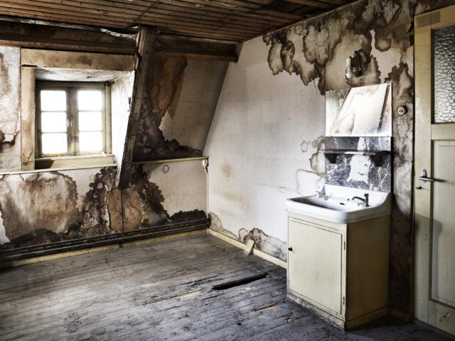 champignon-merule-maison-humidie-degats-bois-conseils-astuces-espace-maison-etage-architecte-escalier-plancher