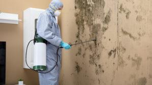 termites mérule charpente combles grenier