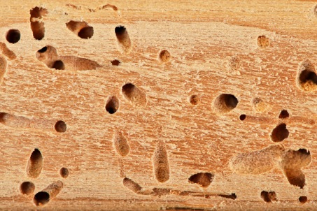 termites-exterminer-problèmes-combles-traitements-solutions